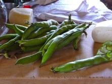 Fava beans and pecorino