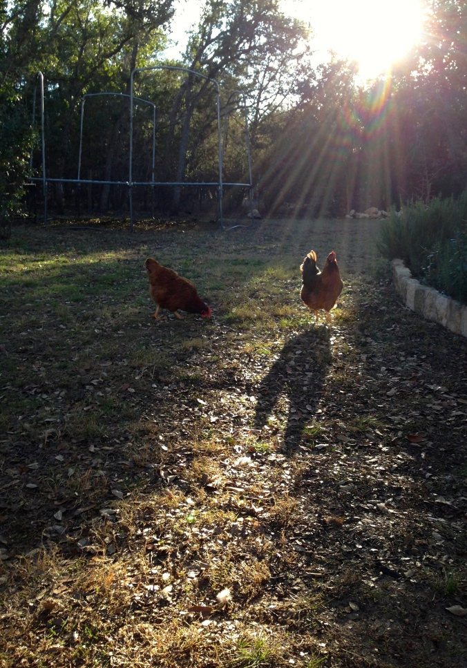 A Chicken and Its Shadow