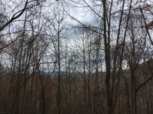 Mountains through bare trees