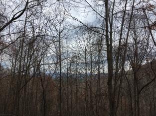 Mountains through bare trees