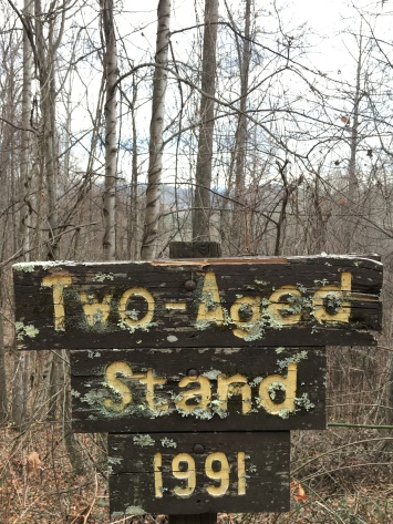 I loved the moss on this sign
