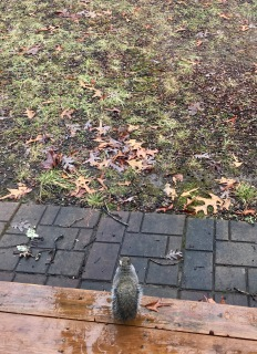Squirrel taking refuge from the rain