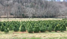 Christmas tree farm on the way to the cabin